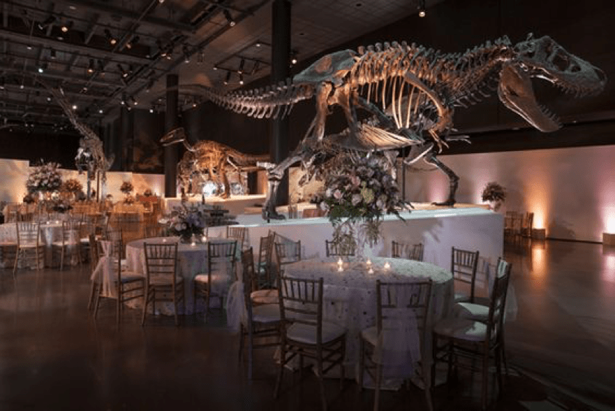 Dino Caterers