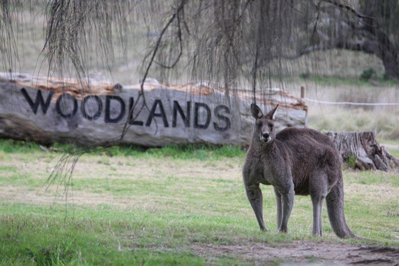 Woodlands Historic Park Victoria