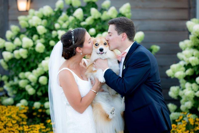 Pet wedding party photo