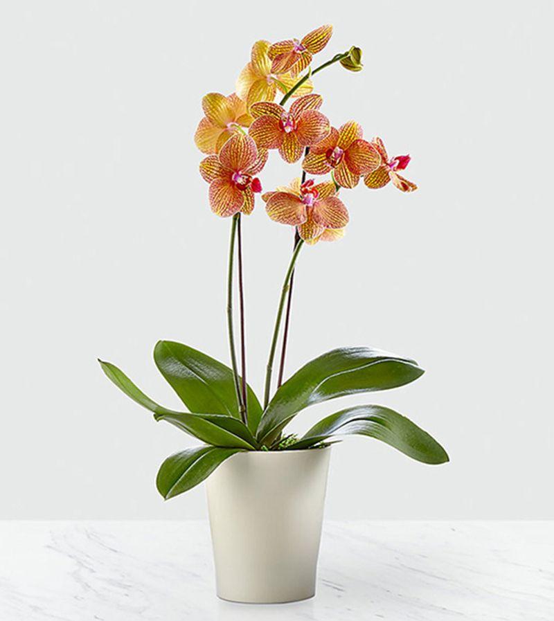 Color Burst Orchid