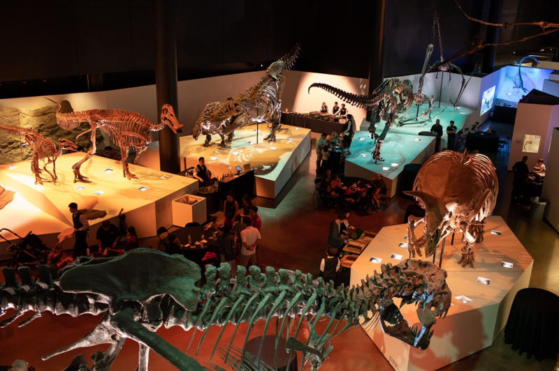 Museum Of Natural Sciences In Houston